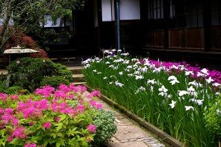 Kaizojihanasyobu090607