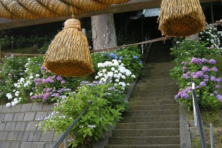 Tokiwayakumo090613