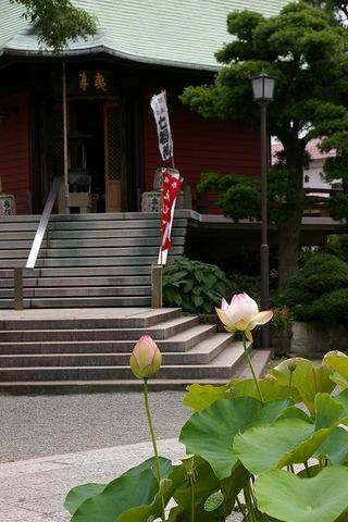 Hongakujihasu090711