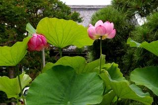 Hongakujihasu0907112