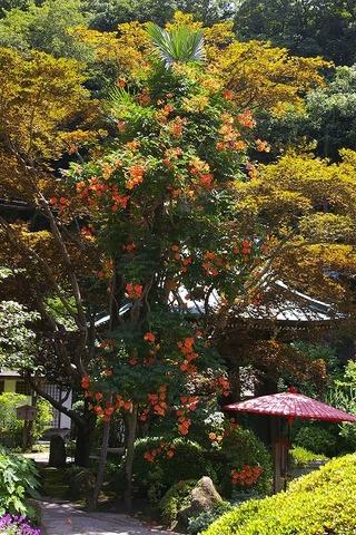 Kaizojinozenkazura090714