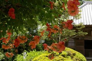 Kaizojinozenkazura0907144