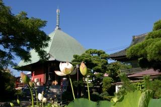 Hongakujihasu090726