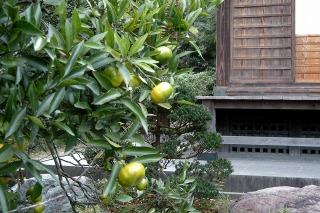 Kosokujitachibana091108