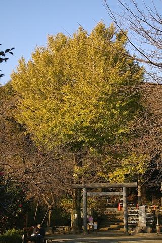 Kuzuharagaokajinjaicho091126