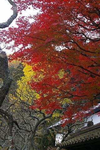 Tokeijikoyo0912012
