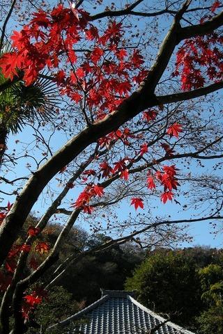 Kaizojikoyo091206_3