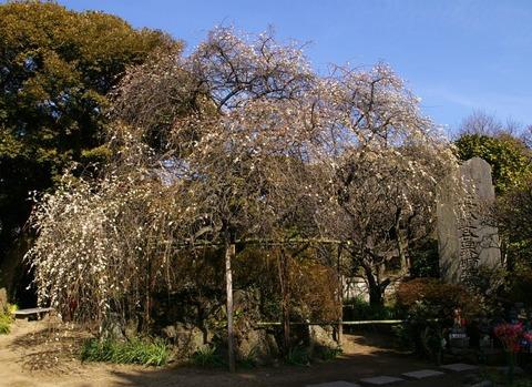 Hokaijisidareume100209