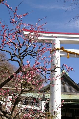 Kamakuragukobai100209