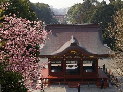 Hachimangukawaduzakura1002242