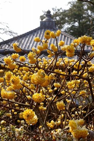 Jochijimitumata100301