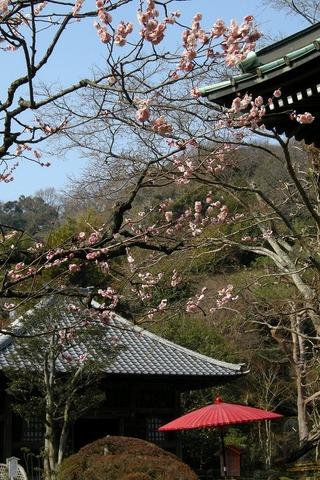 Kaizojiume1003012
