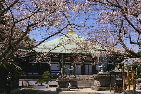 Choshojisakura100330