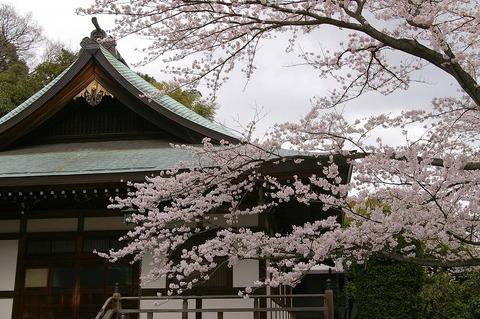 Hokokujisakura1004032