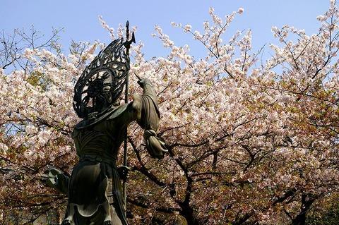 Choshojisakura1004102