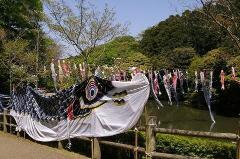 Chuokoenkoinobori1004303