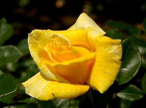 Bungakukanbara100522