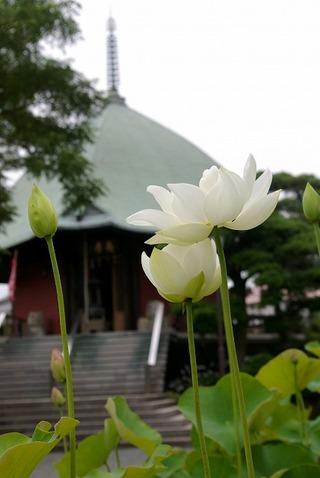 Hongakujihasu1007032