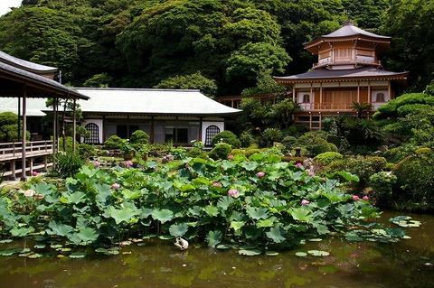 Komyojihasu1007112