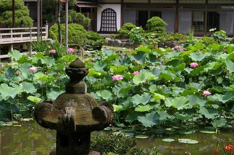 Komyojihasu1007113