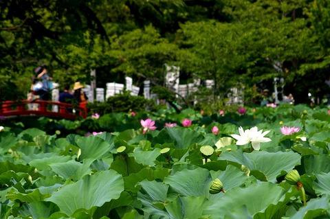 Hachimanguhasu1008015