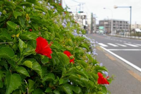 Yuigahamakaigan1008315
