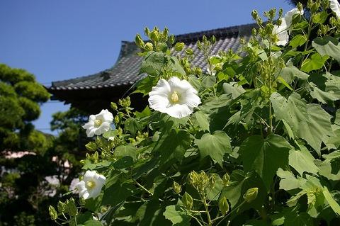 Hongakujifuyo100906