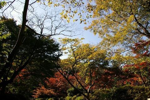 Genjiyamakoen1011113