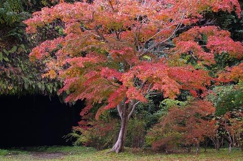 Kaizojichushajo101115