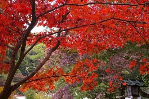 Kamakuragukoyo1011213