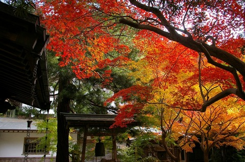 Kakuonjikoyo1011305_2