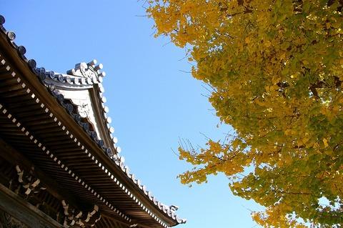 Hongakujiicho101210