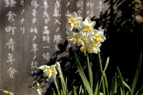 Hokaijisuisen110201