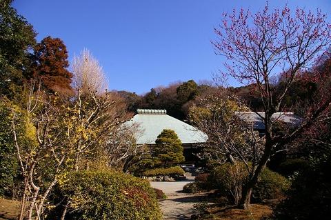Jyomyojiume1102015