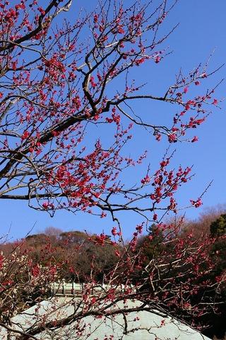 Jyomyojiume1102016
