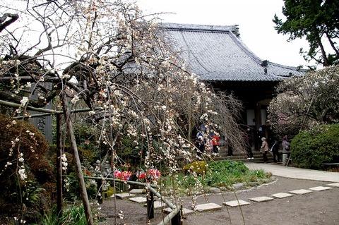Hokaijisidareume1102194