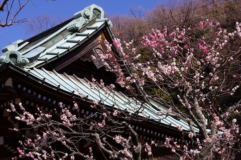Kaizojiume110311