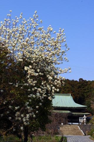 Ryuhojihakumokuren110330