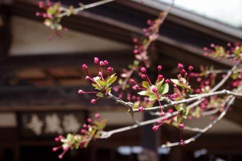 Kaizojikaido110331
