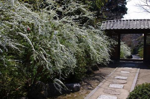 Kaizojiyukiyanagi110331