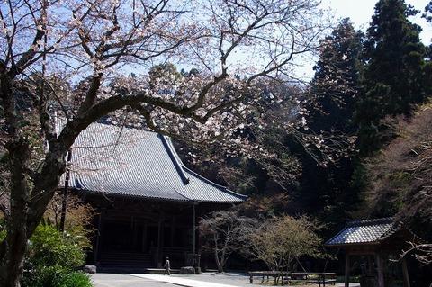 Myohonjisakura110401