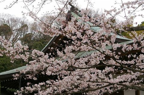 Hokokujisakura1104073