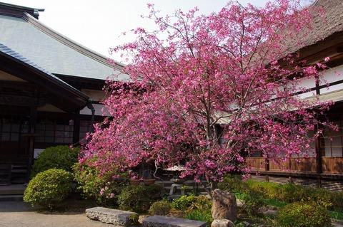 Kaizojikaido110411
