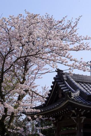 Yakuoji1104113