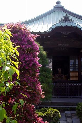 Shugenjitokiwamansaku110424