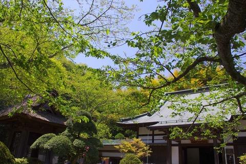 Hokokuji110425