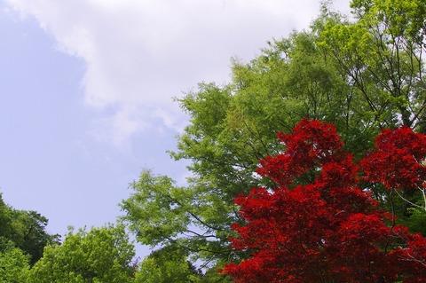 Chuokoenharumomiji110504