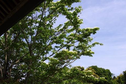 Jojuinyamaboshi110525