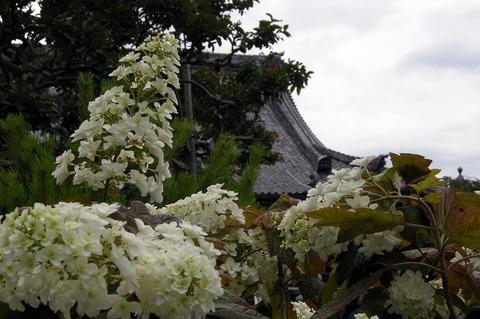 Hongakuji110615