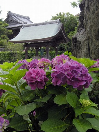Hongakuji1106152